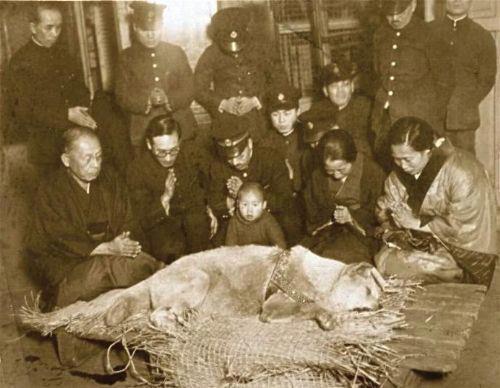 La muerte de Hachiko